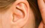 Раковина уха